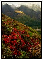 Fall color, Wrangell St. Elias National Park, Alaska