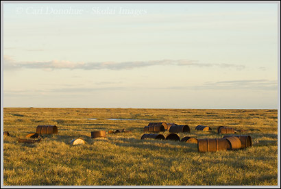Empty oil barrels, Arctic National Wildlife Refuge