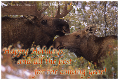 Happy Holidays and all the best for the New Year.