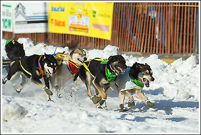 Iditarod sled dog race, 2008, Anchorage, Alaska.