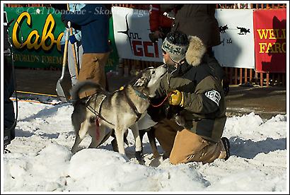 A dog nuzzles a handler before the start of the 2008 Iditarod