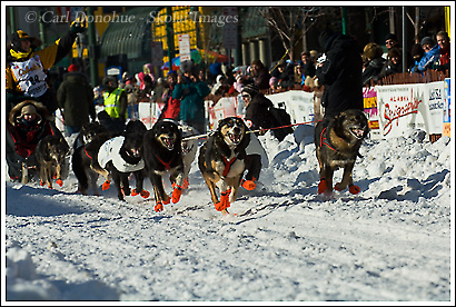 The start of the 2008 Iditarod, Anchorage to Nome, sled dog classic. Anchorage, Alaska.
