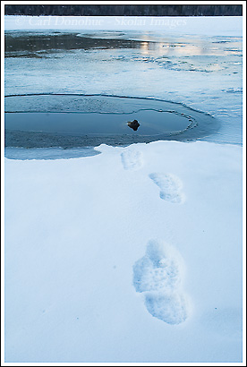 footprints in the snow, winter, Wrangell St. Elias National Park, Alaska.