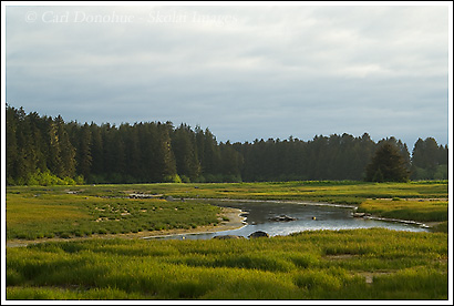 Tongass National Forest, near Yakutat, Alaska.