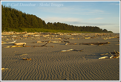 Sandy beach at sunset, Tongass National Forest, Alaska.
