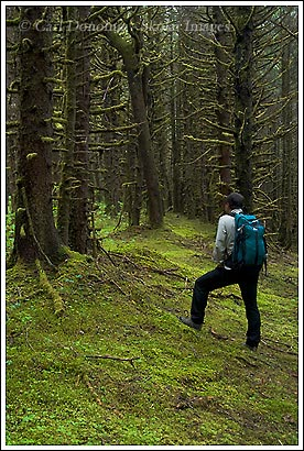 Hiking in the Tongass National Forest, near Yakutat, Alaska.