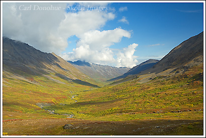 Fall colors in Monahan Creek, Chugach Mountains, Wrangell - St. Elias National Park, Alaska.