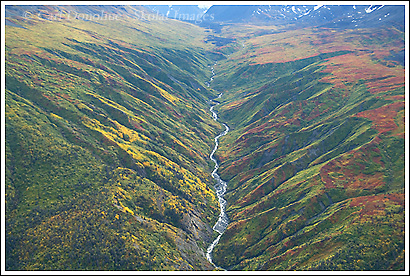 fall color near Tana River, Wrangell - St. Elias National Park, Alaska.
