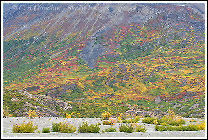 Fall colors, autumn color, Wrangell - St. Elias National Park, Alaska.
