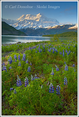 Mt. St. Elias, Icy Bay, Wrangell - St. Elias National Park, Alaska.