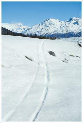 Cross country ski tracks, Wrangell - St. Elias National Park, Alaska.