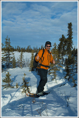 snowshoeing the boreal forest, Wrangell - St. Elias National Park, Alaska.