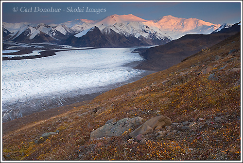Mt Bona and Mt Churchill, the Russell Glacier, alpenglow, Wrangell - St. Elias National Park, Alaska.