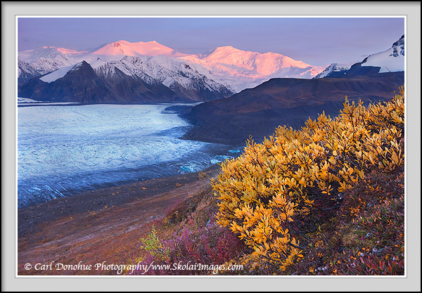 Tallest peaks in the University Range, Mt. Churchill and Mt. Bona rise dramatically from Russell Glacier, catching the last rays of the day, Fall colors in the foreground, Wrangell - St. Elias National Park, Alaska.