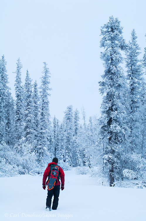 Winter snowshoeing, boreal forest, Wrangell - St. Elias National