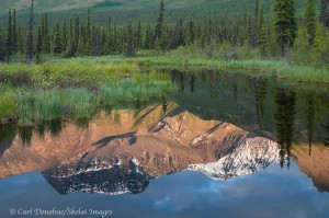 Morning reflection, beaver pond, Wrangell St. Elias