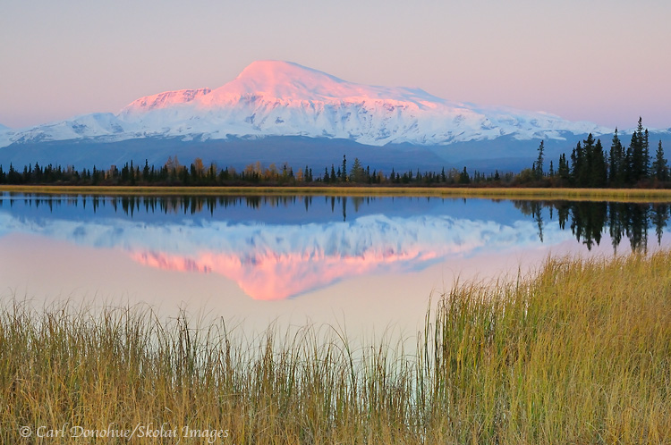 Alpenglow lights up the face of Mt. Sanford. Dawn and reflection in a small kettle pond, fall, Wrangell - St. Elias National Park and Preserve, Alaska.