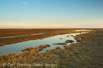 Coastal plain photo, Section 1002, ANWR, Arctic National Wildlife Refuge, Alaska.