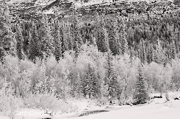 Black and white photo, boreal forest, Wrangell - St. Elias, winter, Alaska.