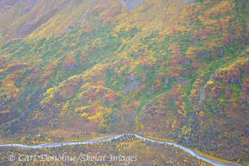 Fall colors, Wrangell - St. Elias National Park and Preserve, Alaska.