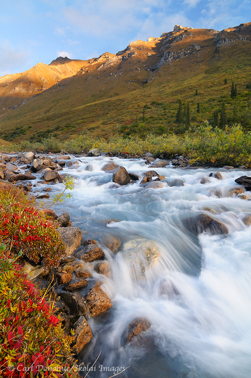 Arrigetch Creek, fall color, Gates of the Arctic National Park, Alaska.