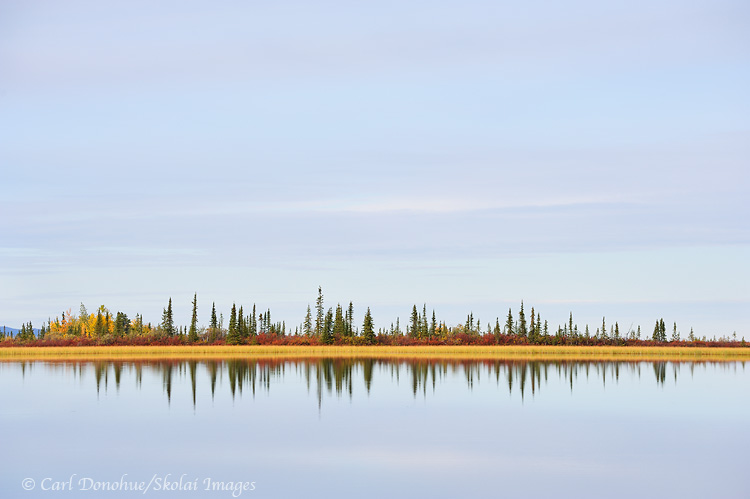 Boreal forest and reflections in a small kettle pond, Copper River Basin, Wrangell - St. Elias National Park and Preserve, Alaska.