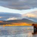 Grizzly bear and landscape, Katmai National Park, Alaska.