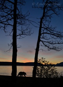 Silhouetted brown bear at sunrise, Katmai National Park, Alaska.