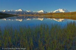 The Alaska Range, and Denali, reflections in a pond.