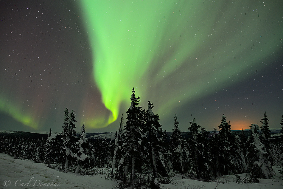 The northern lights over the boreal forest of sub-arctic Alaska.