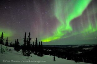 Northern lights display over boreal forest, Alaska.