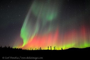 Strong active aurora borealis display, Alaska.