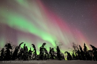 Active aurora borealis photo over the boreal forest, Alaska