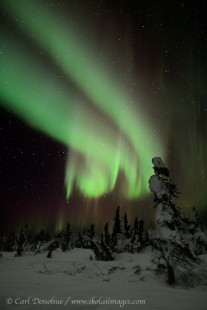 Strong aurora borealis over boreal forest