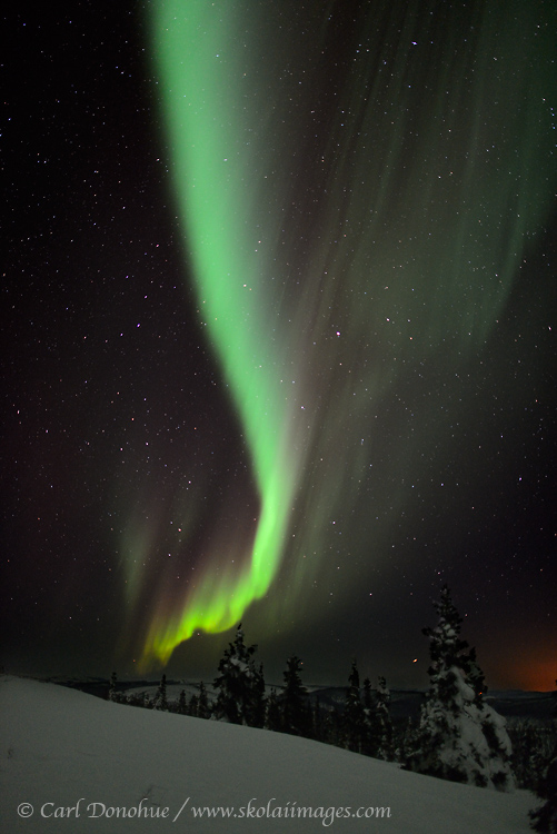 Aurora borealis photo in Alaska over boreal forest