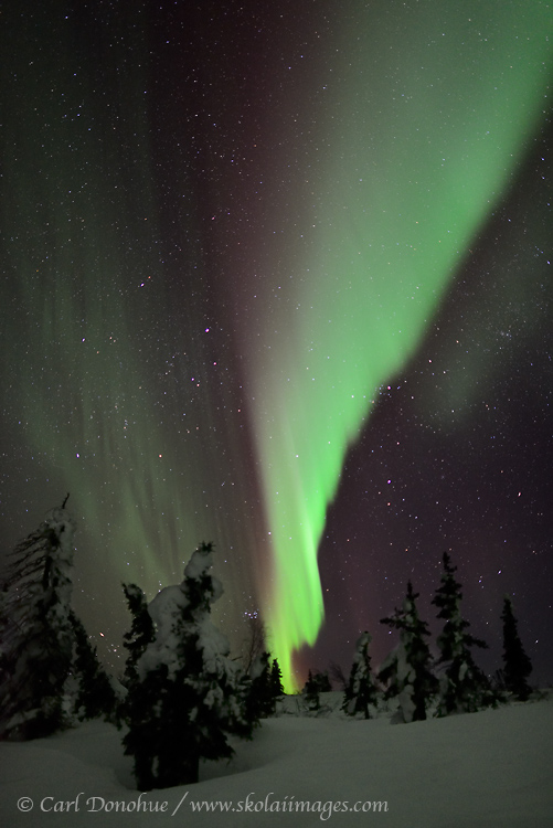 Colorful northern lights over boreal forest.