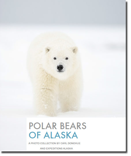 Polar Bear photo ebook by Carl Donohue and Expeditions Alaska