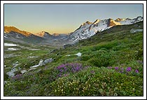 wildflowers bloom in the Chugach Mountains near Iceberg Lake, Bagley Icefield, Wrangell - St. Elias National Park, Alaska