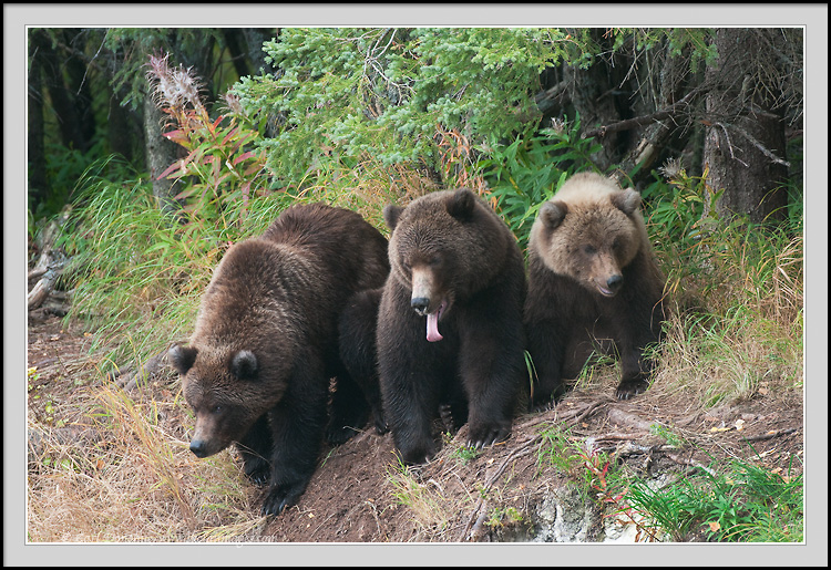 bear mountain online hookup & dating Wwwnwbearscom is a gay group for bears & bear admirers in greater seattle & wa area founded in fall of 1990 a social & service organization with monthly potlucks, many annual events & seattle's springthaworg bear run in april.