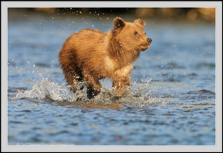 how to play running bear