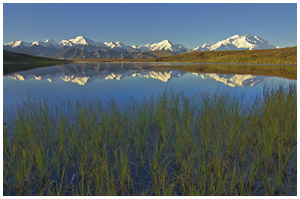 Denali, or Mt McKinley, and reflection in a small tundra pond, Denali National Park and Preserve, Alaska.