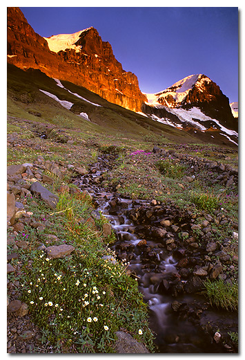 Mountain Avens and Dwarf Fireweed, Hole in the Wall, Skolai Pass, Wrangell St. Elias National Park and Preserve, Alaska.