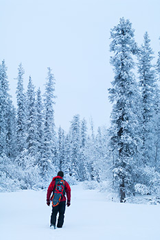 Winter snowshoeing, boreal forest, Wrangell - St. Elias National Park and Preserve, Alaska.