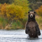 Ted - the coolest brown bear in the world.