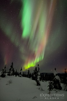 The northern lights over the broken boreal forest of arctic Alaska.