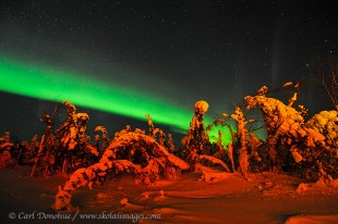 Tail lights on the trees and northern lights in the sky.