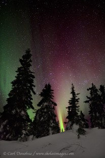 Active red northern lights photo, boreal forest, Alaska
