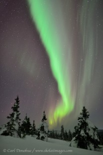 Active northern lights over boreal forest.